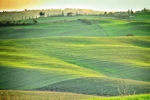 Veld Green Tuscany Italië
